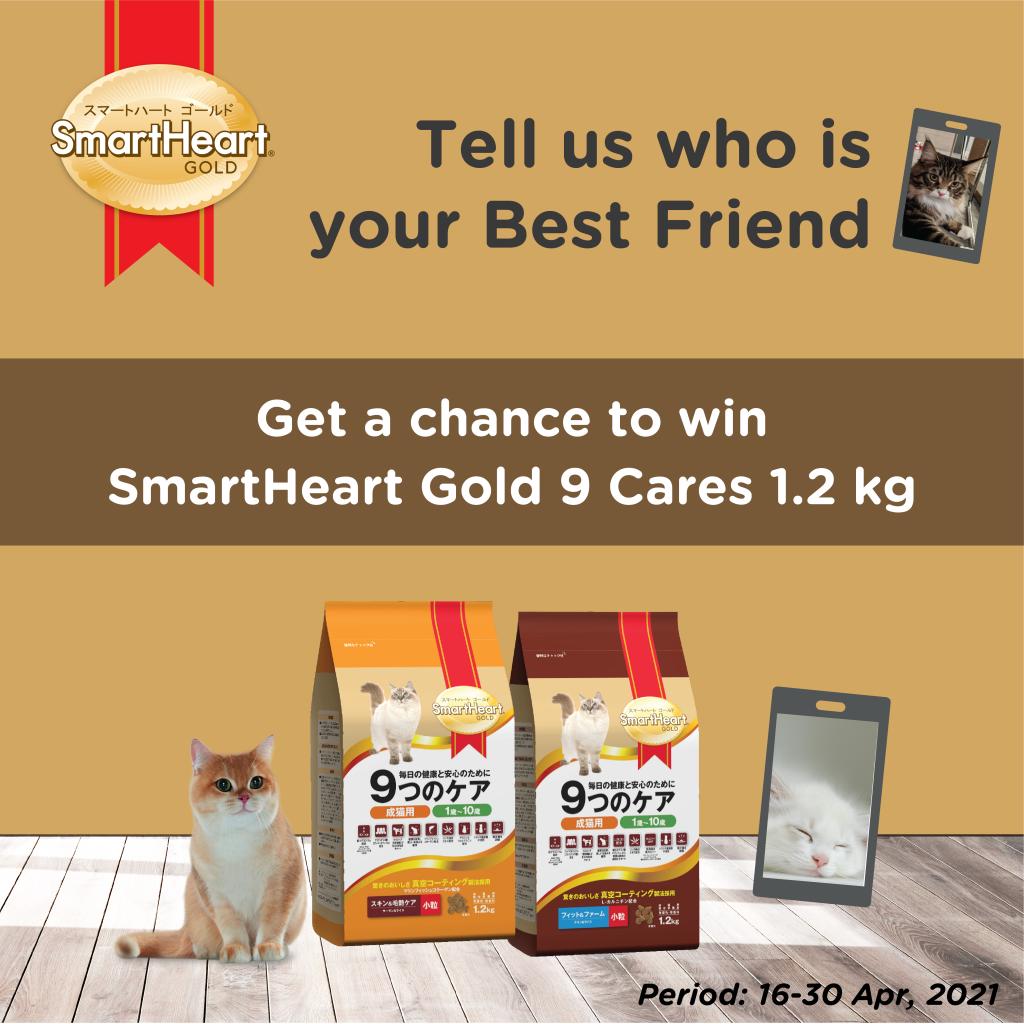 cat food promo-01